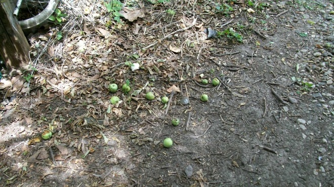 ping pong apples