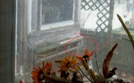 sparrows hiding